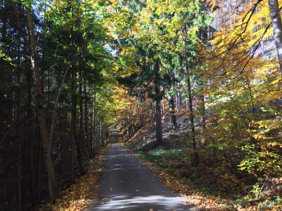 cesta vlese