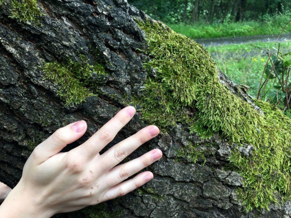 ruka nastromě - spojení spřírodou