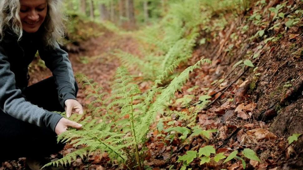 Propojení spřírodou vlese