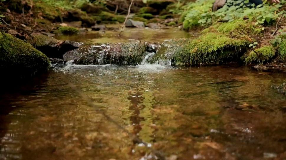 Okolí Janovické louky - potok