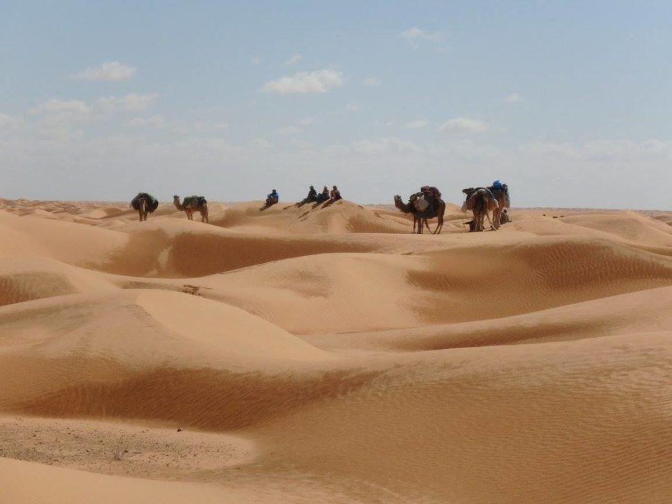 karavana velbloudů naSahaře - Vision Quest 2018