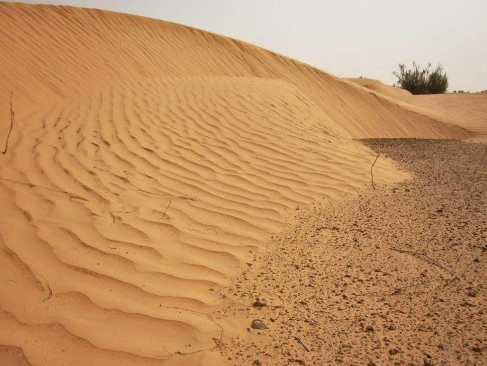 duny napoušti